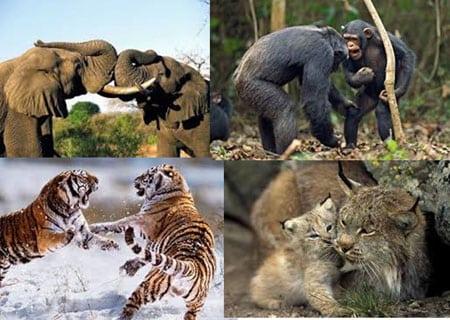 Доминирование и иерархия у животных