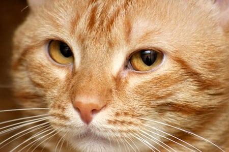 Ошибки в кормлении кошек