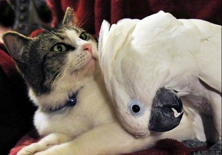 Можно ли держать кошку и попугая вместе?