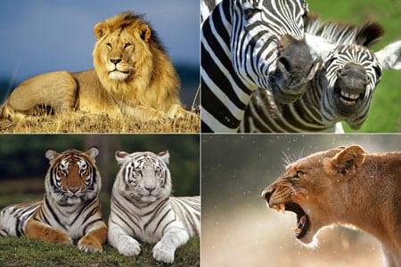 Популяции животных