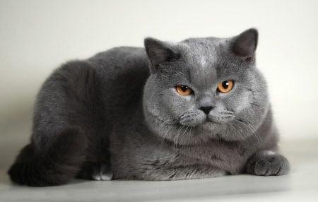 Ядовитые комнатные растения для кошки