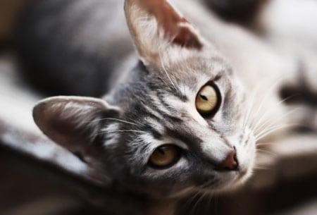 Краткое описание наиболее распространенных болезней животных в детском живом уголке