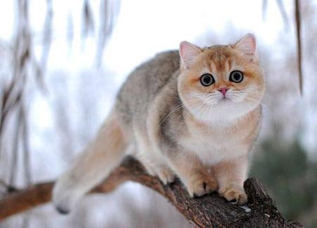 Поведенческие проблемы и социальная адаптация котят
