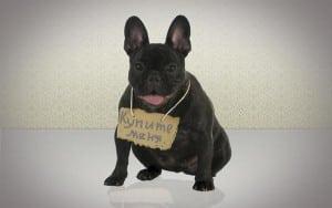 Диарея (или понос) у собаки: его причины, профилактика, лечение