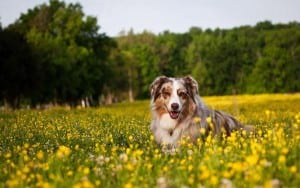 Разные методы определения овуляции у собак