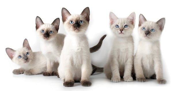 Выбираем четвероногого любимца - кошку
