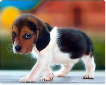 Краткий курс по содержанию и обучению щеночка
