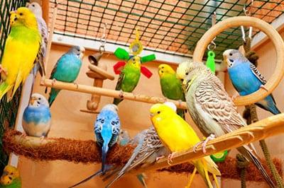 Планируете купить попугая?