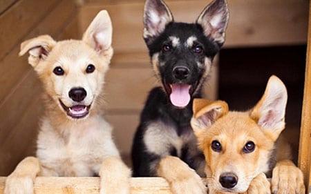 Собаки как домашние питомцы
