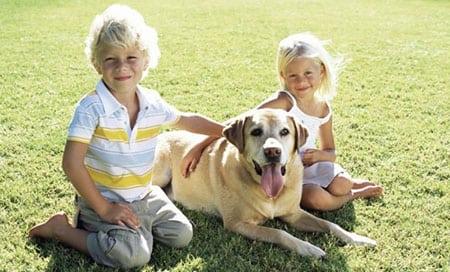 Ребёнок просит собаку