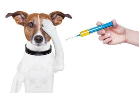 Прививки для собак. Преимущества и недостатки