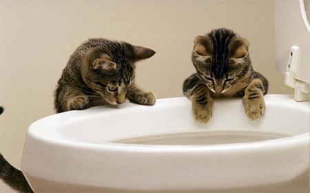 Легкий способ приучить котенка к унитазу