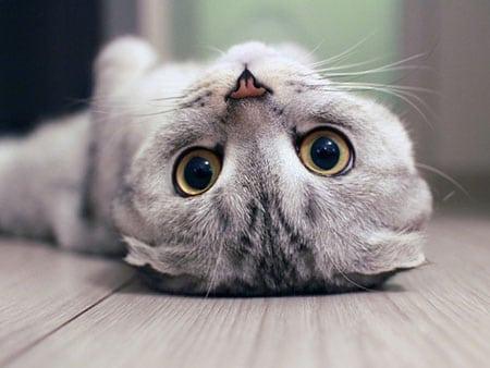 Загадки кошачьего поведения