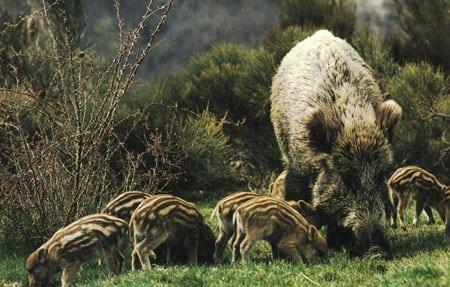 Животный мир и его охрана