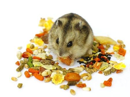 Что ест хомяк или как сделать смесь семян на дому