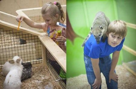 Контактный зоопарк и ребенок