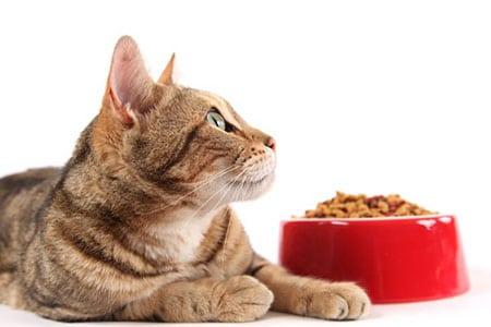 Корм для кошек Eukanuba и Hill's