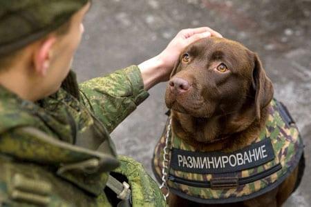 Ветеринарное обслуживание служебных собак