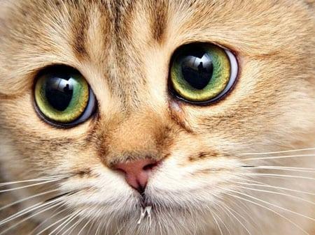 Мочекаменная болезнь у собак и кошек