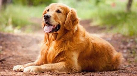 Как лечить диарею у собаки