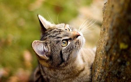Метод перфузии мочевого пузыря в ультразвуковой диагностике уролитиазе домашних кошек