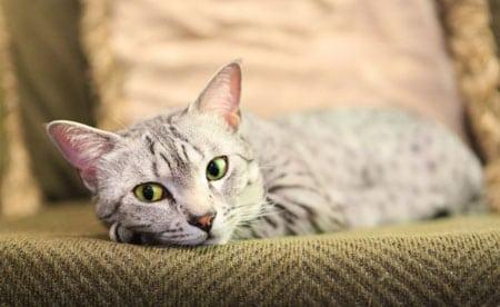 Подготовка квартиры к приезду котёнка