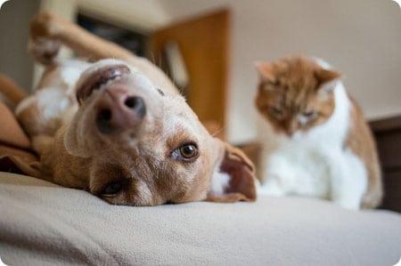 Кошка и собака — правила совместного содержания