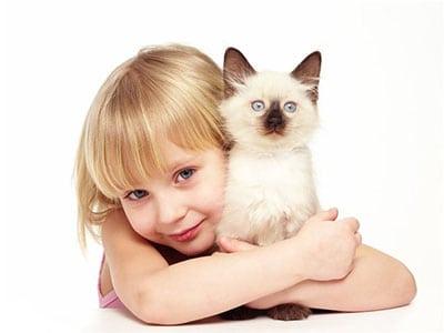 Выбор котенка для молодой семьи