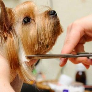 Правильная стрижка для собак