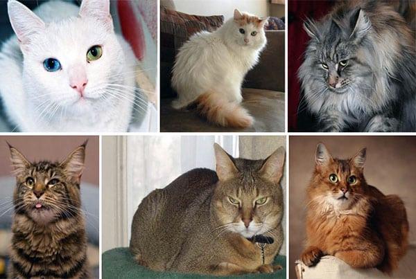 Немного о характерах домашних кошек
