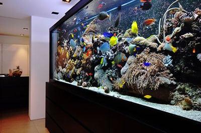 Купить аквариум и аквариумных рыбок это просто