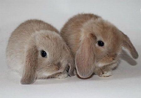 Домашние питомцы кролики. Особенности их содержания