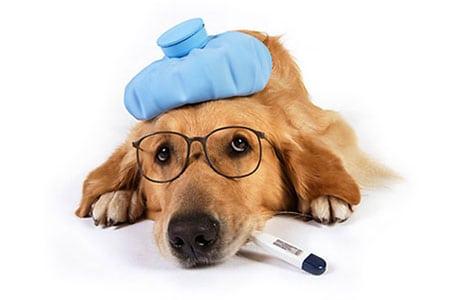 Болезни, которые часто встречаются у собак