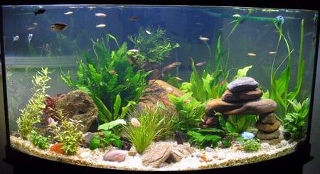 Причины помутнения воды в аквариуме