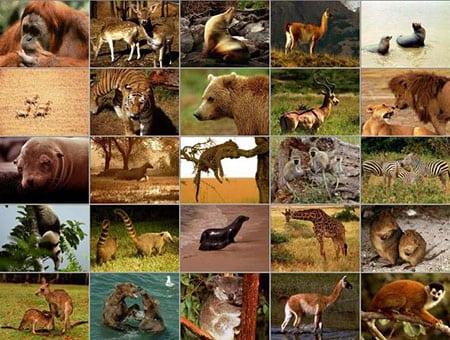 Размножение и развитие у млекопитающих