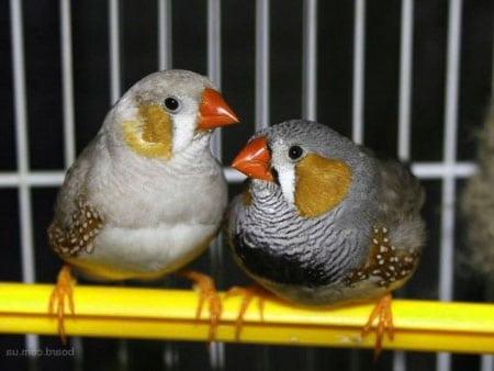 Домашние птицы виды кормов для птиц