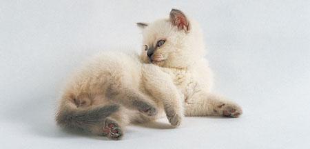 Голосовые выражения котят
