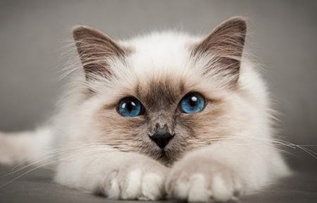 Мимика и жесты у котят