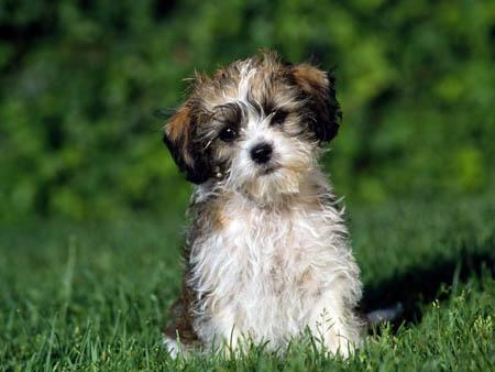 10 вещей, которые нужно знать если у вас есть собака