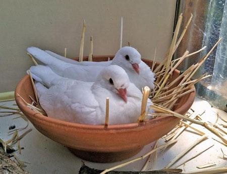 Массовая гибель птиц