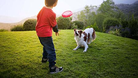 Упражнения с собаками