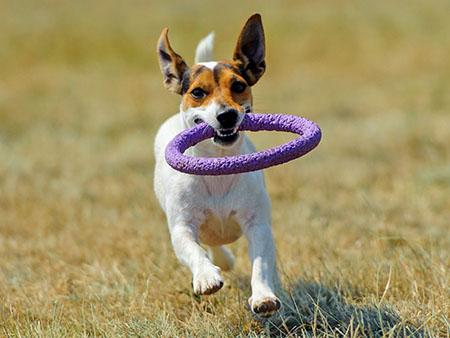 Хвостатая радость: интересные факты о домашних животных